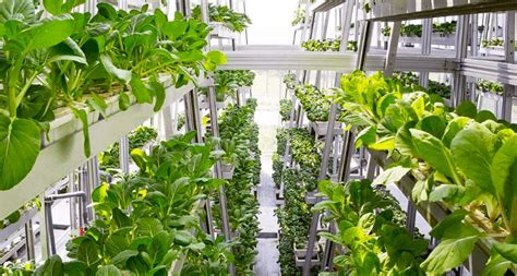 World's First Hydraulic Driven Vertical Farm Produces 1