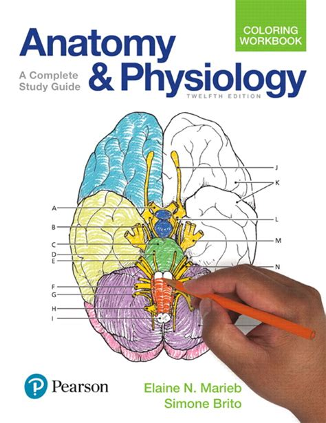 anatomy and physiology coloring workbook a complete study guide 12th edition marieb brito anatomy and physiology coloring workbook