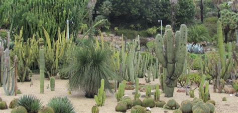 montjuic botanical gardens a free weekend in barcelona barcelona connect