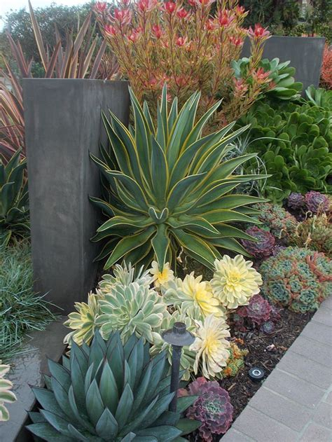 succulent garden ideas 50 best succulent garden ideas for 2017