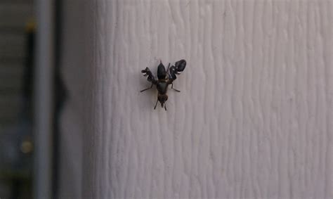 tiny flying insects in house swarms of small flying bugs what are they ask an expert