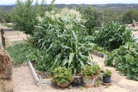 Raised Garden Beds Australia. Full Image For Both Beginning And Experienced Gardeners Love