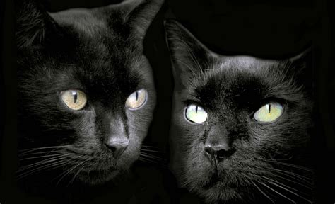 Cat Wallpaper by 15 Enchanting Wallpapers Of Beautiful Black Cats