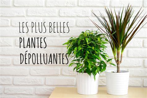 les plus belles plantes d int 233 rieur d 233 polluantes album photo aufeminin