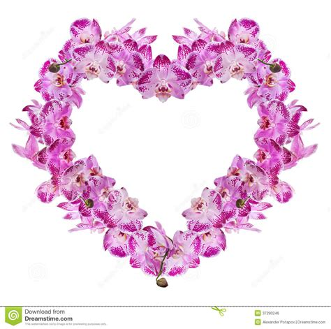 heart from isolated pink orchid flowers royalty free stock