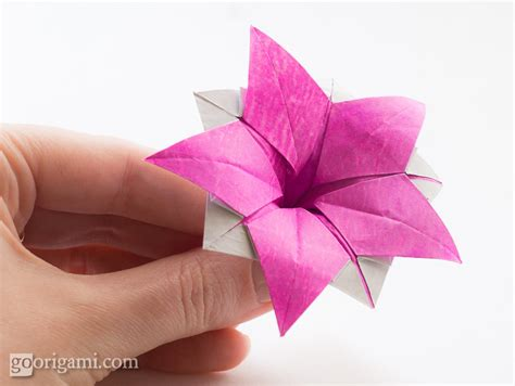 flower origami for origami flower ipomeia rubra origami flower ipomeia