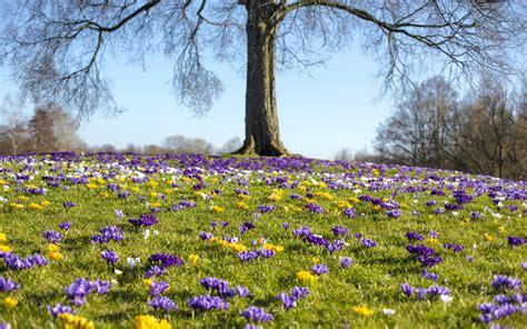 Der Garten Europas by Der Garten Im M 228 Rz Garten Europa
