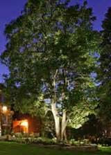 outdoor tree lighting outdoor tree lighting advice and tips