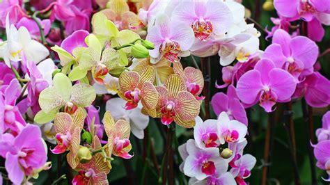 entretien orchid 233 e apprendre 224 bien s occuper d une orchid 233 e
