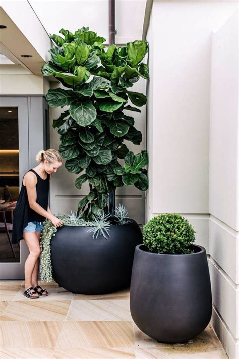 large indoor planter 17 best ideas about large flower pots on
