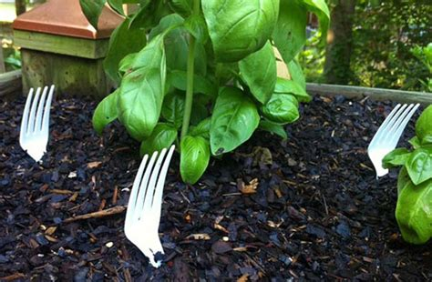 how to keep cats out of vegetable garden gardening tip keeping cats out of your vegetable beds