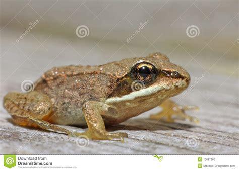 tree frog woodworking wood frog stock photo image 10687260