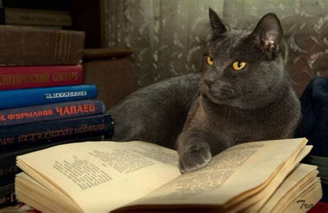 picture books about cats cat reading books 7 images