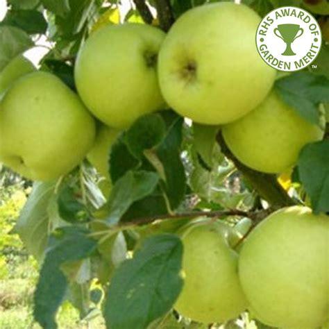 all tree greensleeves apple tree buy apple trees purchase apple