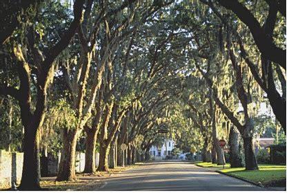 oak tree rubber st exles design landscape plants edward f