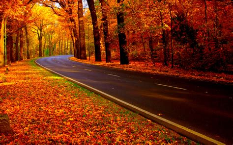 for fall autumn road uploaded to curezone by folliculitis on