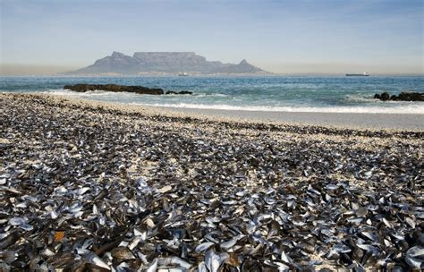 top 10 destinations at cape cape town etc top 10 travellers choice destinations in