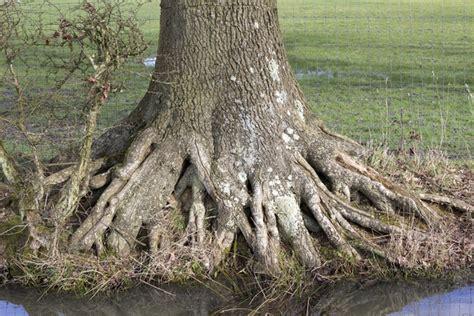 base tree free stock photos rgbstock free stock images tree
