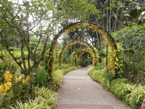 botanical gardens price singapore botanic gardens top tips before you go with