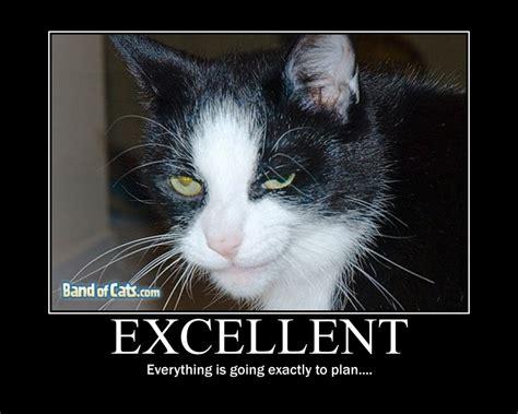 evil cat painting un homme transforme sa maison en un paradis pour les chats