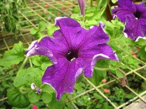 garden flowers pictures and names garden plants flowers philippines 25812 garden flowers