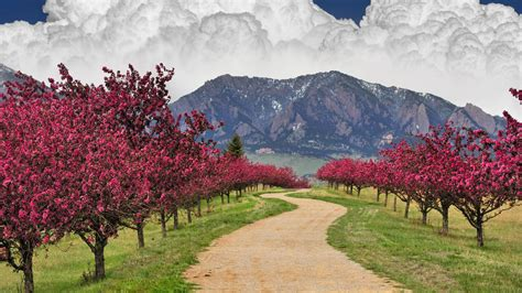 mountains clouds cherry blossoms trees trail colorado boulder wallpapers