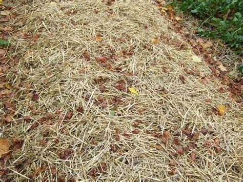 straw mulch vegetable garden vegetable garden cover for winter protection veggie