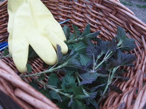 rubber sting blogs handling nettle without the sting