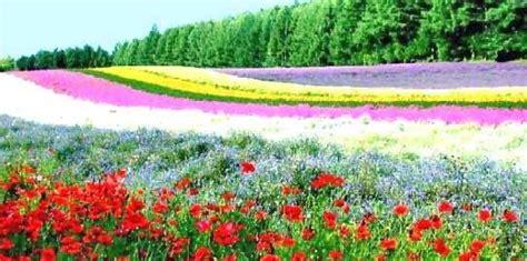 world best flower garden best flowers in the world best flower garden