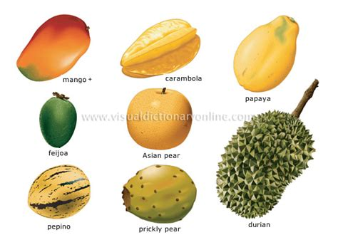 food amp kitchen food fruits tropical fruits 4