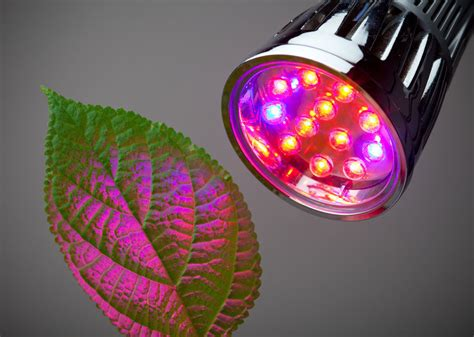 lights best 5 best led grow lights for indoor gardening projects