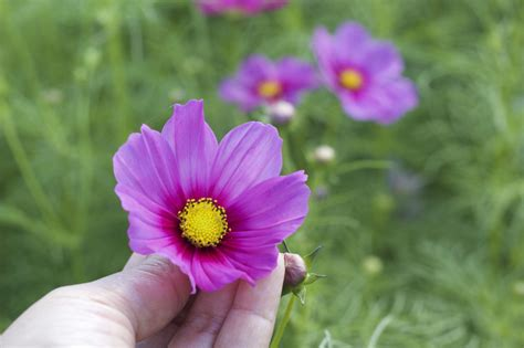 flowers to plant in vegetable garden 5 flowers and one vegetable to plant in your garden