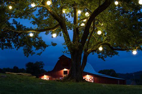 summer tree lights led garden light outdoor path lighting ideas
