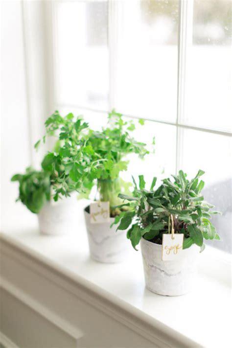 herb garden indoor 20 indoor herb garden ideas home design and interior