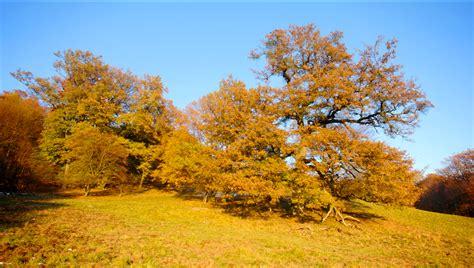 chagne trees season change tree images