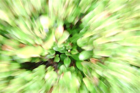 acid flower acid flower trip by smexiiren on deviantart