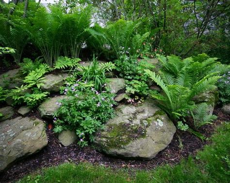 rock garden plants for shade plants for rock gardens in the shade 28 images 25 best