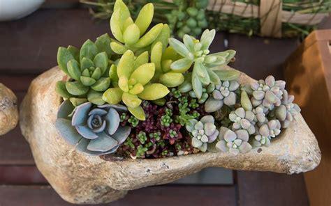 planters for succulents unique planters for succulents 28 images unique white