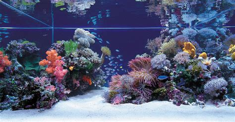 any salties out there saltwater aquascapes aquascaping world forum