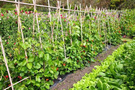 vegetable gardens intensive vegetable gardening nana s garden gate