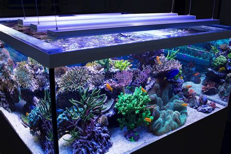 aquarium led lights lighting in an aquarium pondquip