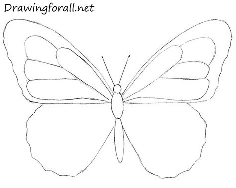 butterfly step by step how to draw a butterfly for beginners drawingforall net