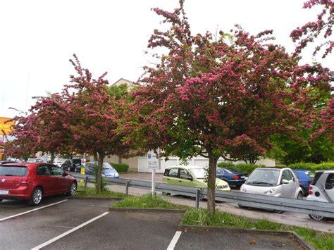 Im Garten Wuchs Der Baum by B 228 Ume Bis 2 M H 246 He Swalif