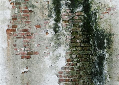 Ist Schwarzer Schimmel Gefährlich 5340 by Schwarzer Schimmel Im Mauerwerk 187 Wie Entfernen Sie Ihn