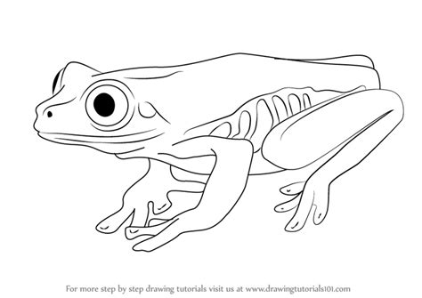 how to draw a realistic tree step by step learn how to draw a tree frog hibians step by step