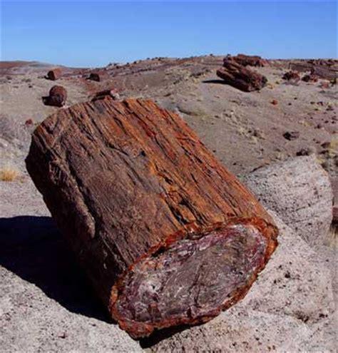 petrified wood state fossil of arizona petrified wood