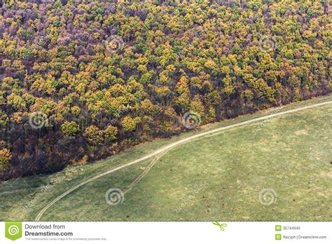 from up above forest from up above stock photo image 35744940