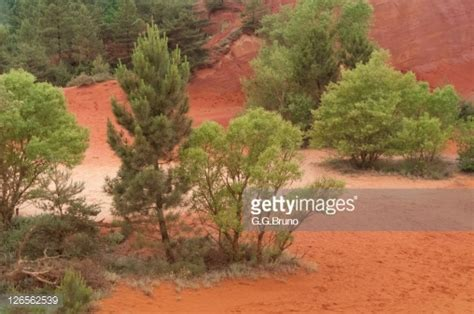 maple tree clay soil trees growing on clay soil stock photo getty images