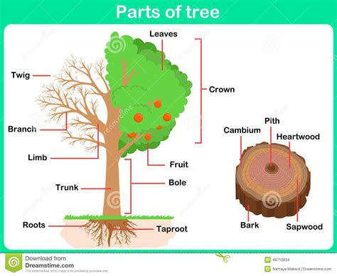name of the tree parts of a tree clipart clipartsgram