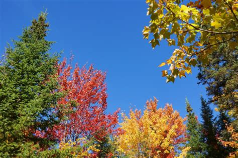ottershaw trees november s plants of the month are trees news the
